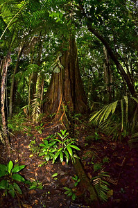 Yasuni National Park