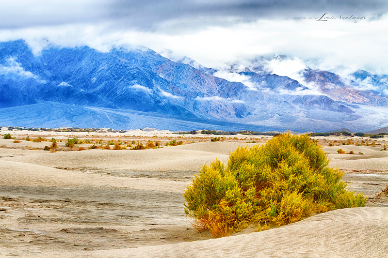 Cool Hues of Morning...<br /> Mesquite Dunes, Stovepipe Wells, Death Valley National Park.