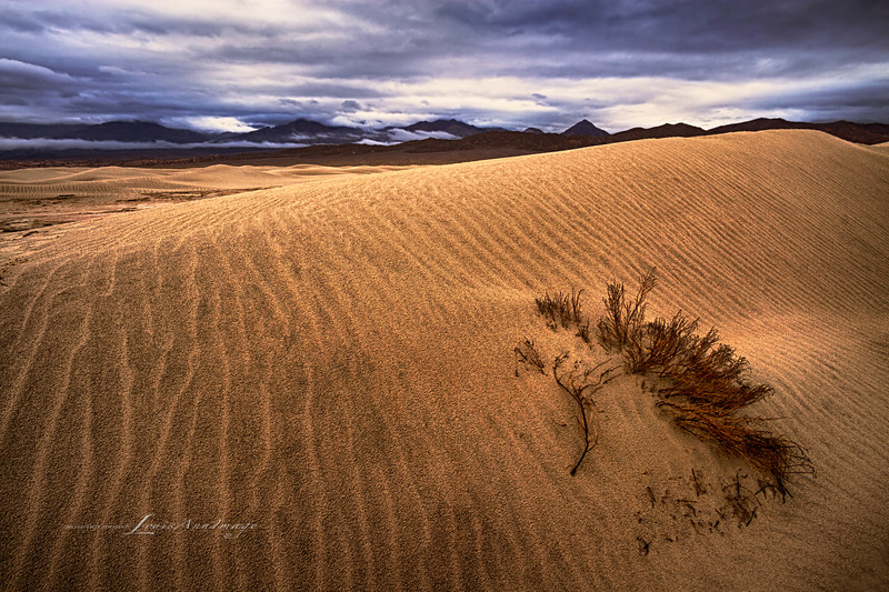 Buried Alive...<br /> Shifting desert sands all but obscure a small Juniper Tree on an stormy Death Valley morning - Mesquite Dunes, Stovepipe Wells, Death Valley National Park, California.  A three exposure HDR Set.