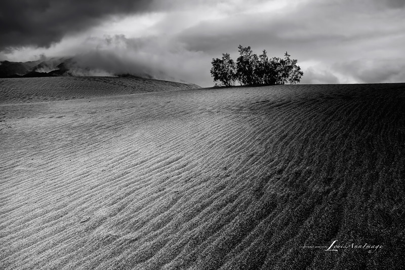 Rain, Dunes, Dusk...<br /> Rain etches normally soft sand at Mesquite Dunes, Death Valley National Park, California