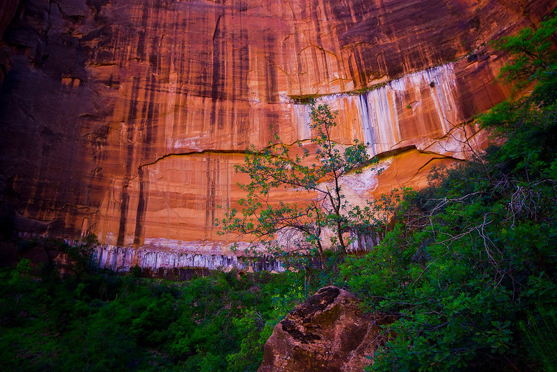 Face of Castle Dome - From the Upper Pool Trail. Zion National Park, Utah.