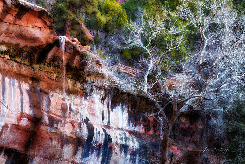 Desert Varnish - Face of Lower Emerald Pools Falls, Zion National Park, Utah