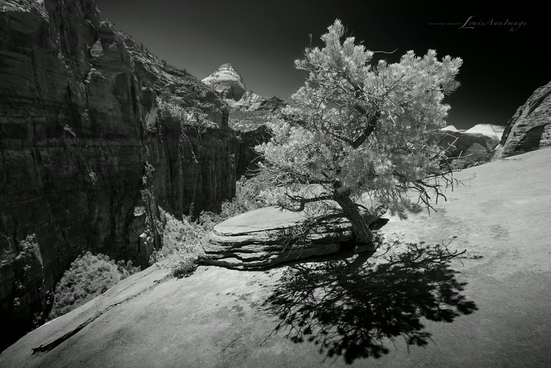 Zion's Shadow ~ At the Edge