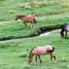 """Horses along """"Enchanted Circle"""" drive, north of Taos"""