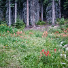 Wildflowers, near Moraine Lake