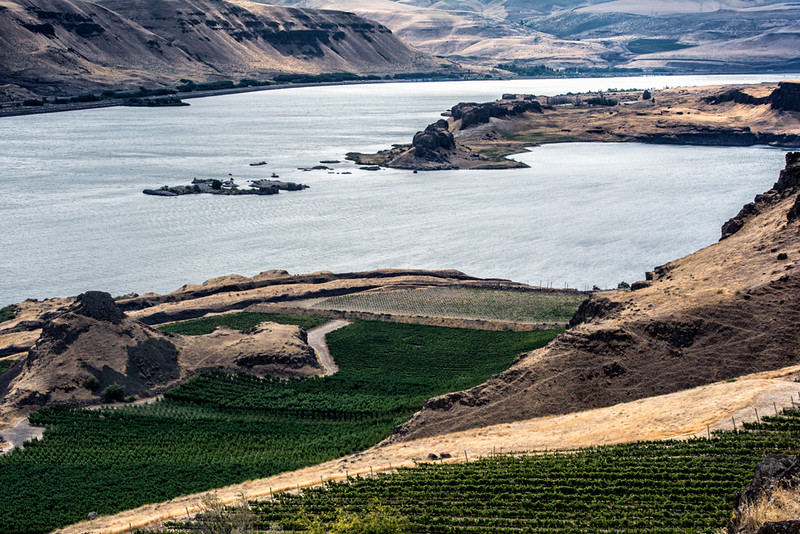 Vinyards along the Columbia River Gorge