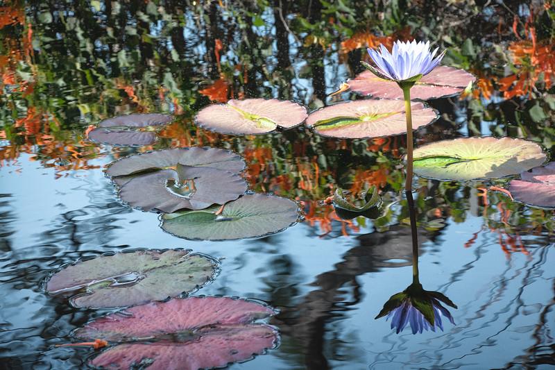Monet in Naples?