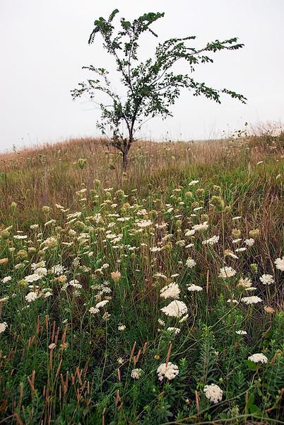 Blue Mounds SNA, prairie wildflowers