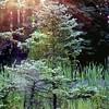 MN Forestry Center, bog at sunrise