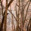 Foggy fall near Pine Creek