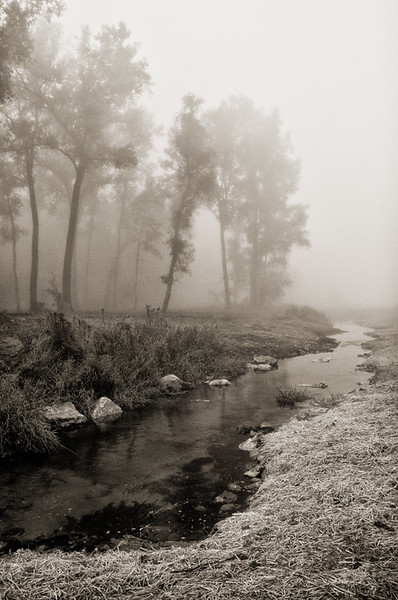 Foggy Pine Creek near Maiden Rock, Wisconsin