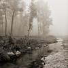 Foggy Pine Creek near Maiden Rock, Wisconsin