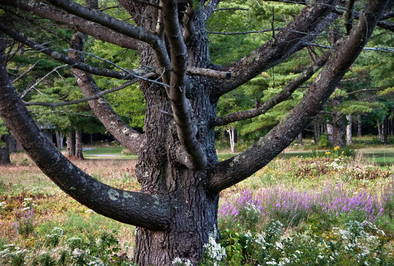 Moose Point Park, near Rockport, Maine