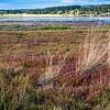 Landscape view near Coupeville