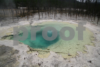 Thermal spring, Norris Geyser Basin, Yellowstone National Park, ,WY