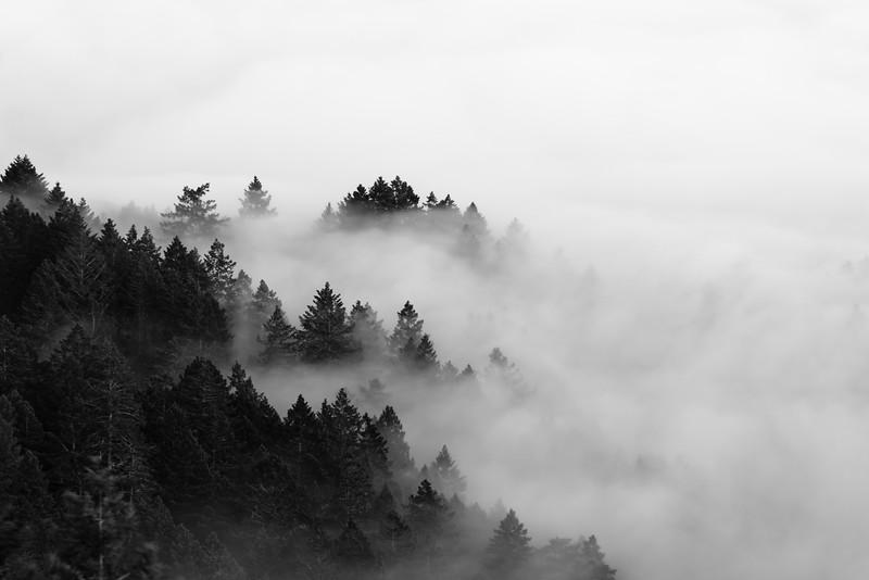 Mt. Tamalpais Fog