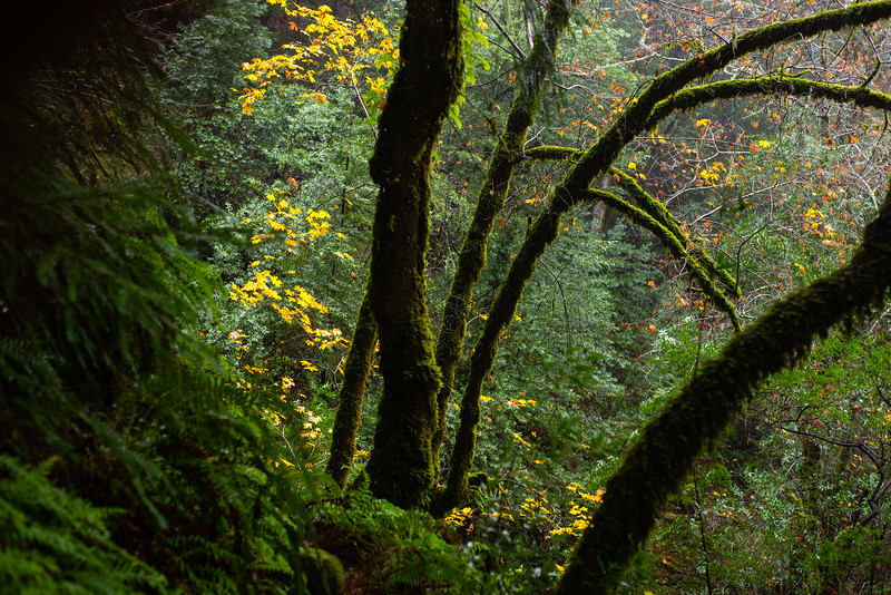Moss Coated Trees