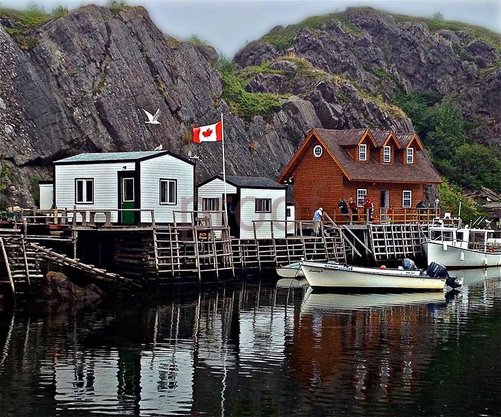 Newfoundland & Labrador, Canada: Ocean sea life, rugged & scenic