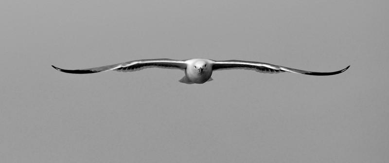 Gull, South Entry, Baraga, Michigan