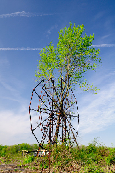 A Tree growing through the Ferris Wheel At Chippewa Lake Park  5
