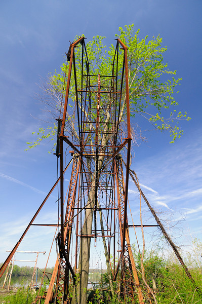 A Tree growing through the Ferris Wheel 2