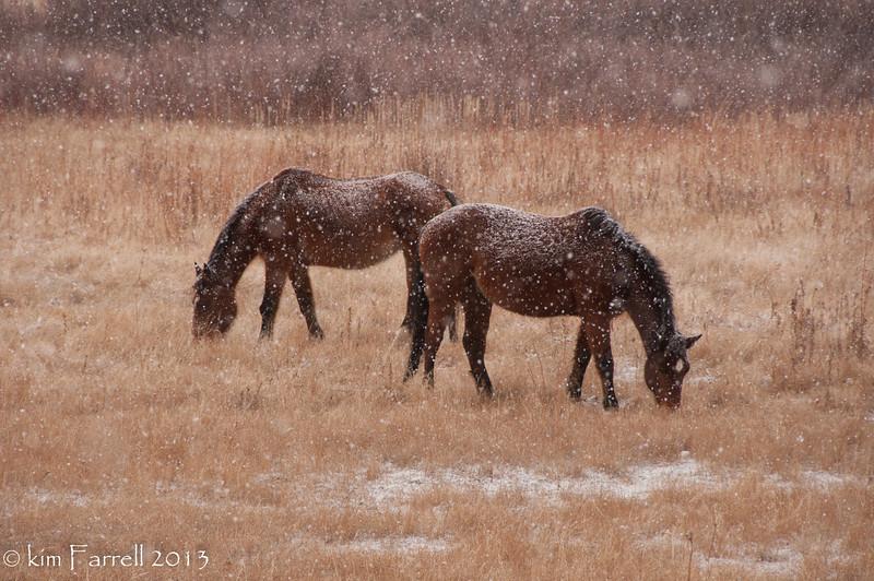Snowfall and horses.