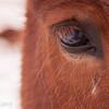 Horse lashes.