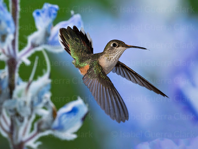 A beautiful Hummer