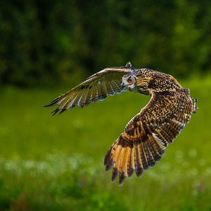 Swooping!