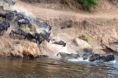 Masai Mara crossing