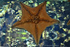 Starfish on Glass