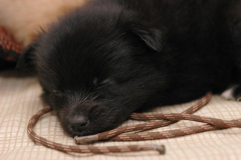 Cutting teeth on strings makes this little one sleepy.
