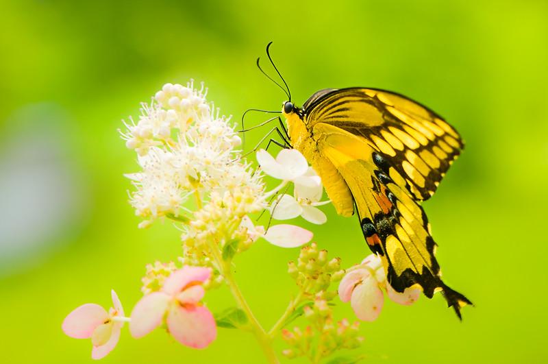 Butterfly Sip