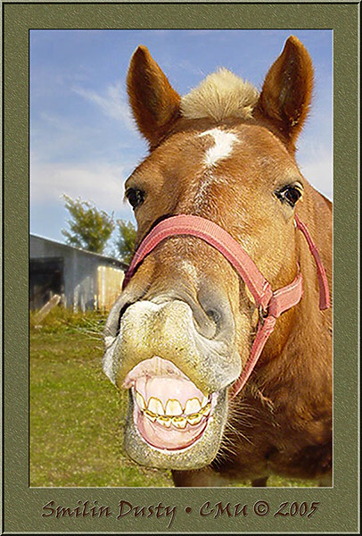 """""""SMILIN DUSTY""""<br /> <br /> Dusty loves apples, grass, carrots & hay... but ask him to smile <br /> while offering a sip of your coffee and he'll give a big grin everytime."""