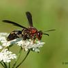 Wasp Alert - Yikes