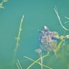 A Turtle At Myakka River Motorcoach Resort