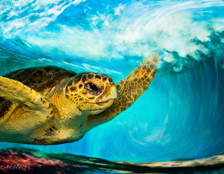 Loggerhead in Wave