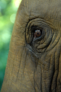 The eye of the Elephant.