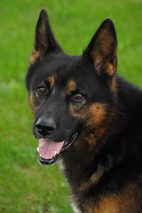 Pet dog of Guy Joris in Calet, France