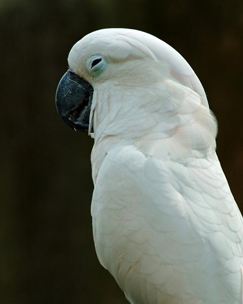 Meditating Parrot