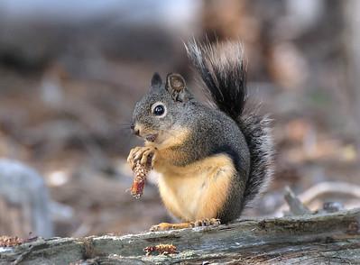 Mr. Squirrel