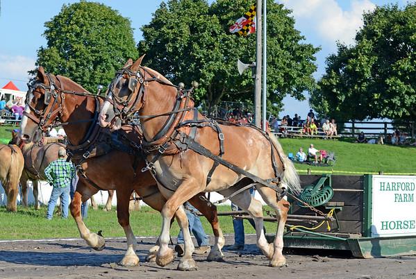 Champion pullers at the Harford County Farm Fair