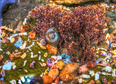 Jan 2: Under the Sea (Tidepool Point Lobos)