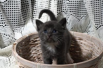 Grey Orphan Baby