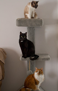 "IMG#8198  ""Southern Jersey Cat Tree"""