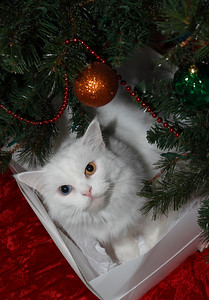 """A Cat's Christmas"""