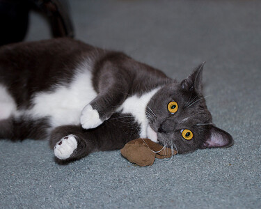IMG#7834 Bubbie ...caught with Gizmo's catnip!