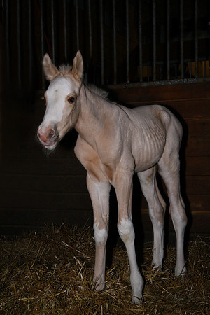 IMG#6984 2009 Welcomes the April Fool's Baby-6 hours old...a fine specimen...!