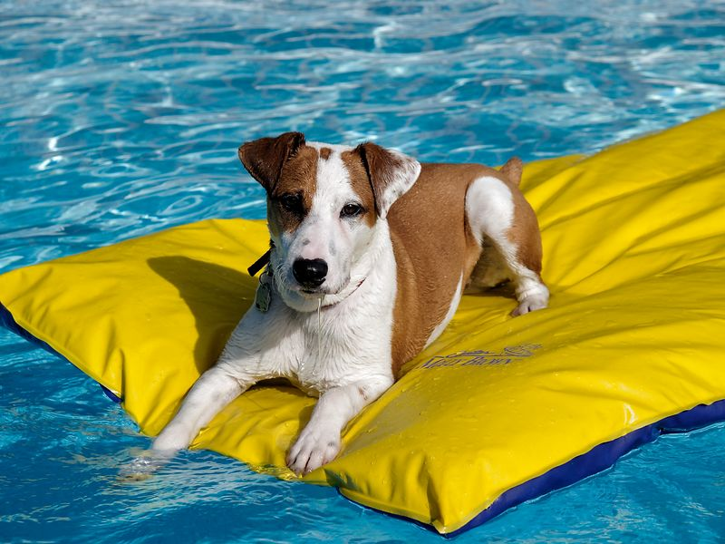"""Getting Orion in the pool really entails getting our """"unsinkable"""" raft over to the deck where he can jump on.  He pretty much just slaps at the water to splash himself to cool off.  Occasionally, he falls in, but swims right back to the raft."""