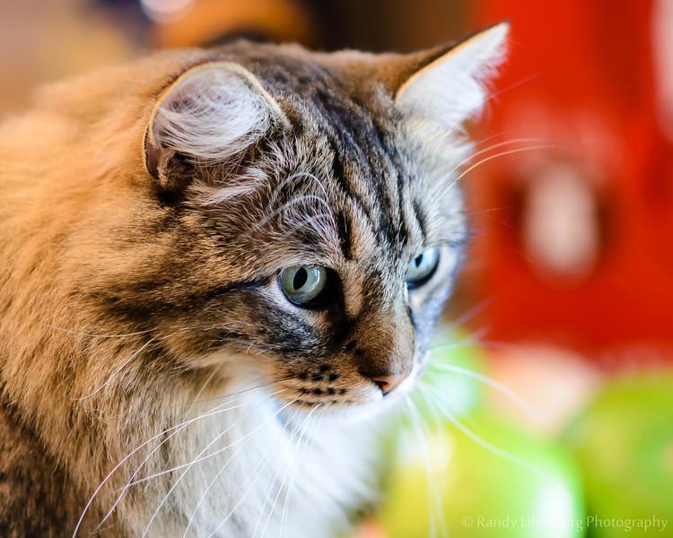 kitties_121224_0030